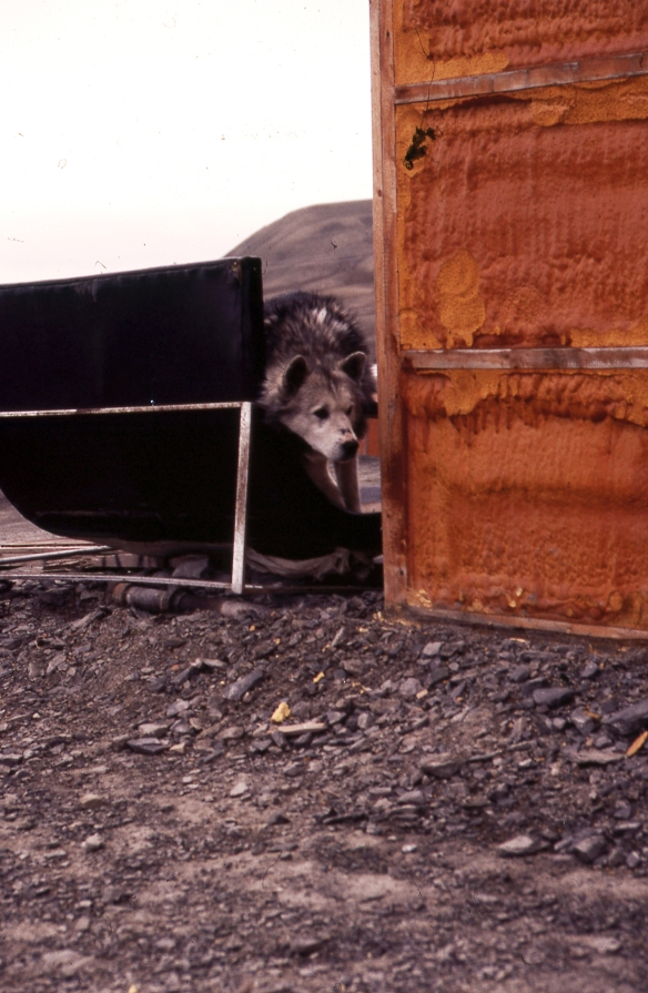 Mould Bay, 1984-07, Husky; 067-02_1984-07-xx-R