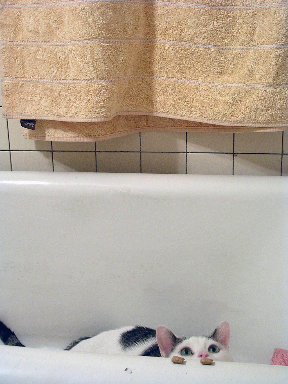Mon chat 12-R