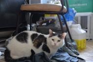 Mon chat 015-R